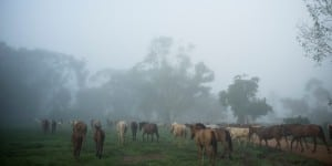 Horseback Central America Riding